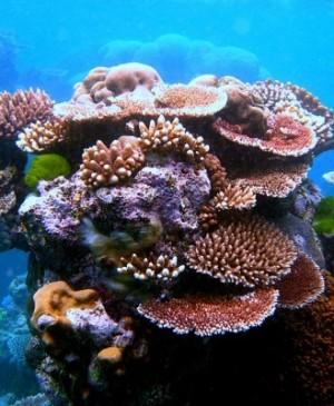 Allarme per la Barriera Corallina, quasi tutta la sua superficie è in pericolo